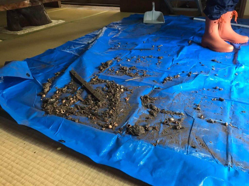 掃除したハクビシンのフン画像